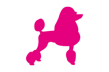 Pet silhouette vector logo for web and print. Pink isolated standing poodle dog and looking to the right.