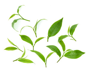 Top view set of Green tea leaf isolated on white background