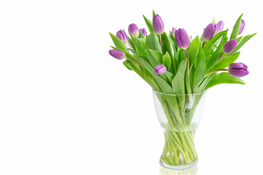 Beautiful light purple  tulips with leaves isolated on white background. Spring flowers and plants.Holiday backgrounds