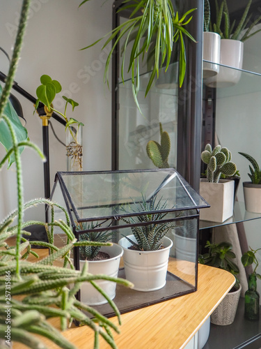 Outstanding Small Greenhouse With Two Succulents On A Wooden Table In A Interior Design Ideas Philsoteloinfo