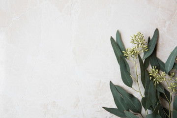 Eucalyptus On Marble Wall mural