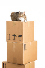 moving with animals