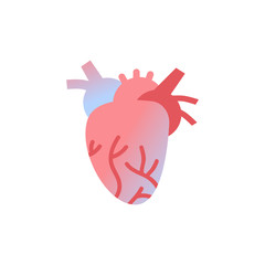 anatomical heart icon human body organ anatomy healthcare medical concept white background