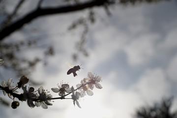 Insektenflug im Frühling