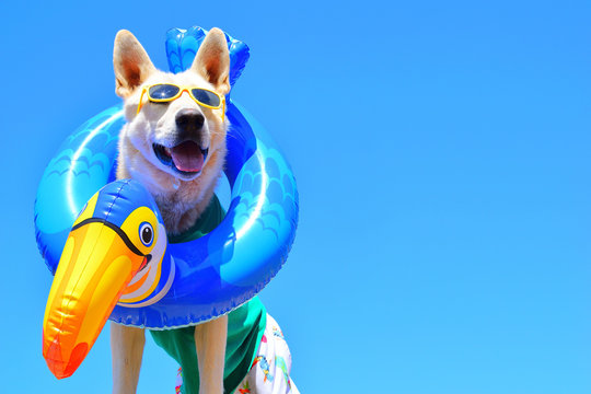 happy dog with sunglasses