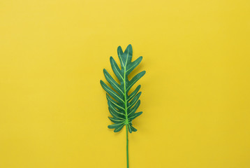 Table top view aerial image of summer season holiday background concept.Flat lay green leaf on modern rustic yellow paper backdrop.Free space for creative design mock up & template text for content.