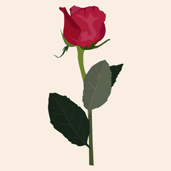 Blooming red rose vector flat isolated illustration
