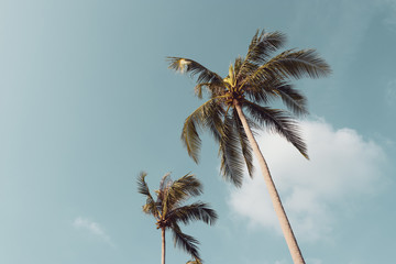 coconut palm trees against the blue sky with vintage color filter