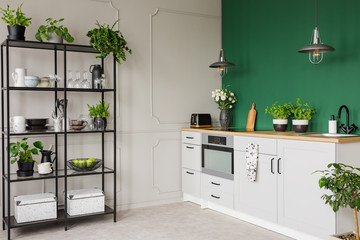 Green and grey kitchen interior with plants and herbs, real photo with copy space