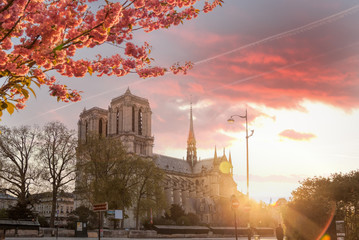 Fototapete - Paris, Notre Dame cathedral with spring trees in France