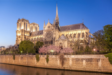 Fototapete - Paris, Notre Dame cathedral in the evening during spring time, France