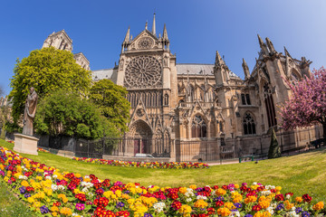 Fototapete - Paris, Notre Dame cathedral with spring flowers in France