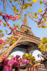 Wall Mural - Eiffel Tower during spring time in Paris, France