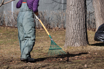 Cleaning leaves in the city, janitor sweeping the foliage in spring park. Woman street sweeper with rake