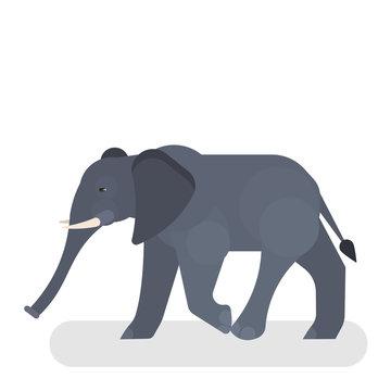 Cute elephant in wildlife. Mammal big animal