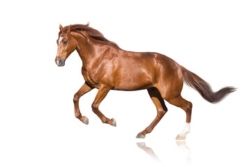 Wall Mural - Red stallion isolated on white background