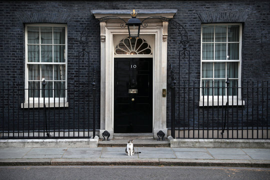Larry the cat sits outside 10 Downing Street in London