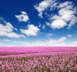 Fototapete - Spring flower field