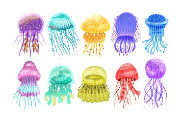 Wall Mural - Collection of gorgeous marine animals - jellyfish isolated on white background. Bundle of or sea jellies of various types. Ocean fauna, aquatic creatures. Flat cartoon colorful vector illustration.