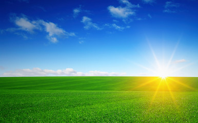 Green field and sun. Fototapete