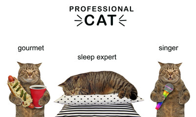 The funny cat likes to eat, sleep and sing. Professional. Motivation. White background.