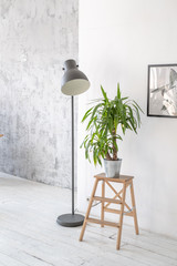 Potted palm plant on a wooden rack in the interior
