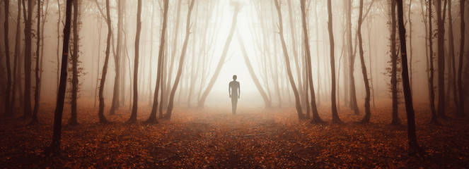 Obraz mysterious forest panorama with strange figure on magical road - fototapety do salonu
