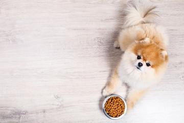 Pomeranian dog with dry food in bowl on the floor Fototapete