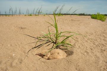 Bird?hatchling?in sand in?Mamiraua?Ecological Reserve, Amazon Region, Brazil