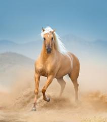 palomino andalusian horse running in desert