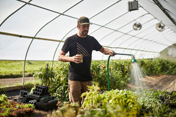 Male farmer watering plants in greenhouse