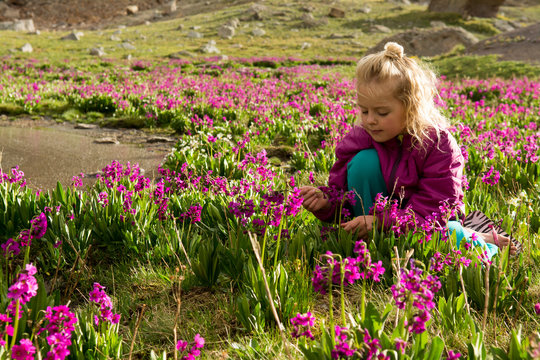 A young girl sitting in  wildflowers,  San Juan National Forest,  Silverton, Colorado.