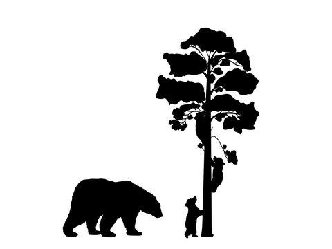 Two bear cubs climbing tree black silhouette animals. Vector Illustrator.