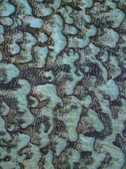 Aerial view of reef texture