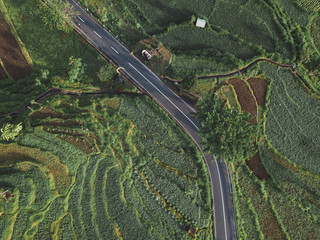 Aerial view of the road in the rice field