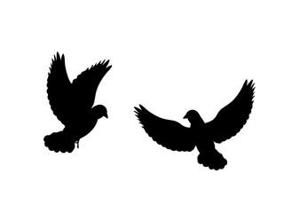 Pigeons bird  black silhouette animal. Vector Illustrator.