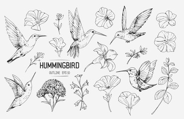 Hummingbirds and tropical flowers. Hand drawn illustration converted to vector