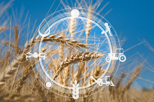Digital agricultural messages and icons on field background