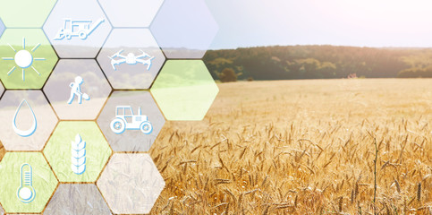Digital icons for management and monitoring agriculture Wall mural
