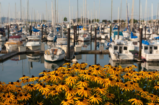 Squalicum Harbor in Bellingham, Washington, is Decorated with Spring Flowers Along the Promenade. Squalicum Harbor is used by both private watercraft and commercial fishing boats.