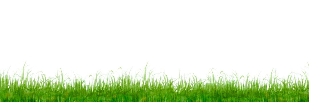 草 芝生 背景 黄緑 水彩 イラスト