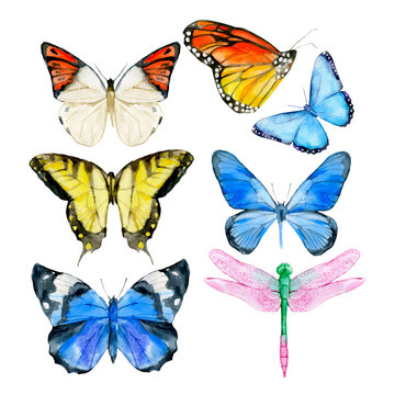 Watercolor of colorful collection butterflies isolated on the white background, vector illustration. Exotic and tropical butterfly, blue, yellow, pink dragonfly. Spring illustration.