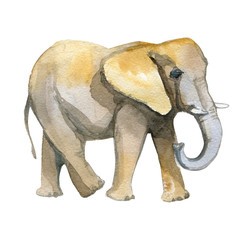 Elephant yellow watercolor realistic illustration isolated on white.