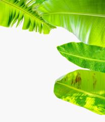 Bordure de feuilles de bananier