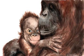 watercolor drawing - animals - orangutan with baby, sketch