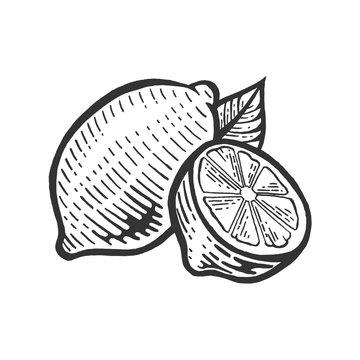 lemon citrus fruit sketch engraving vector illustration. Scratch board style imitation. Black and white hand drawn image.