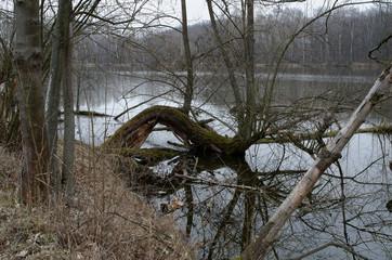 Depressed view of drowned tree in lake