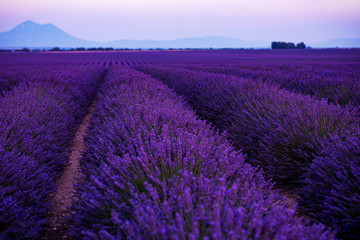Papiers peints Lavande colorful sunset at lavender field