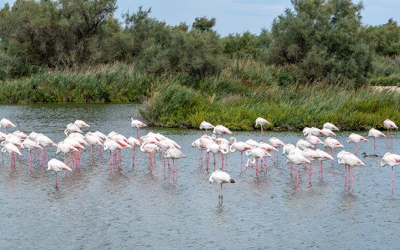 Flamingo. Park. Lake. Nature. Birds. France