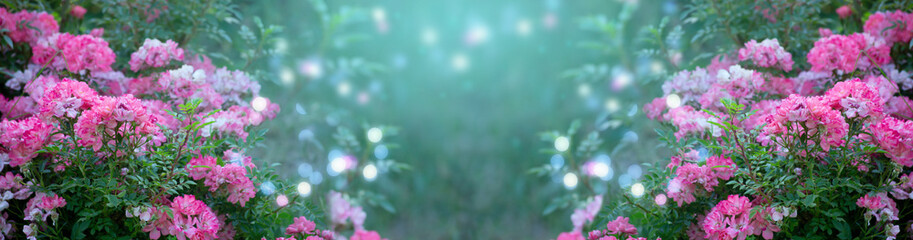 Wall Mural - Mysterious spring floral banner with blooming pink rose flowers on blurred background with glowing bokeh